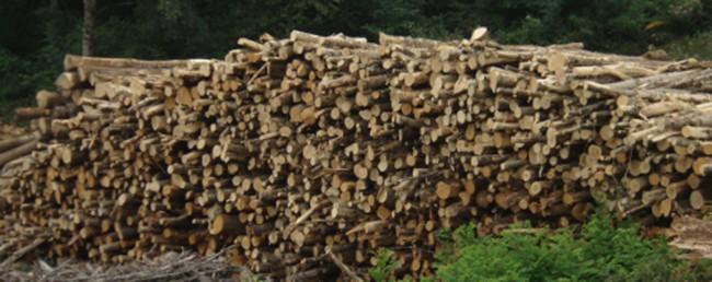 coupe buche de bois beautiful couper du bois de chauffage. Black Bedroom Furniture Sets. Home Design Ideas